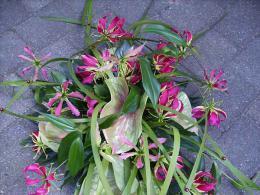 ellen-deelen-natuurlijke-bloem-creaties-graftoef-gloriosa-en-thyphablad.jpg