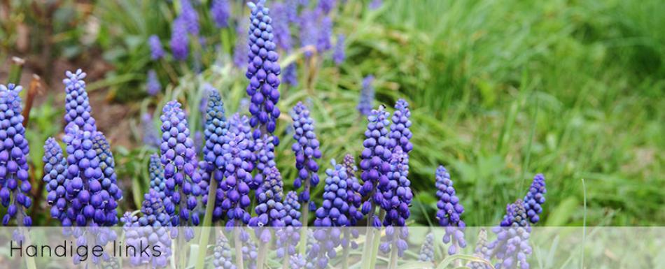ellen-deelen-natuurlijke-bloem-creaties-achtergrond-handige-links-header