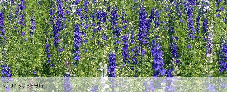 ellen-deelen-natuurlijke-bloem-creaties-achtergrond-cursussen-header