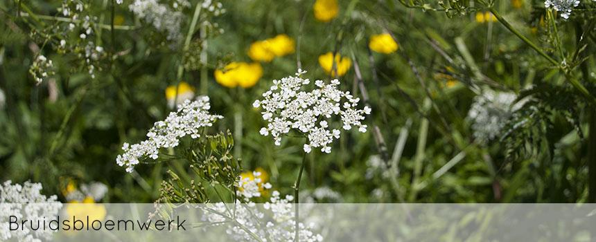 ellen-deelen-natuurlijke-bloem-creaties-achtergrond-bruidsbloemwerk-header